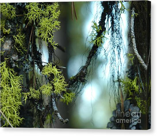 Mossy Playground Canvas Print