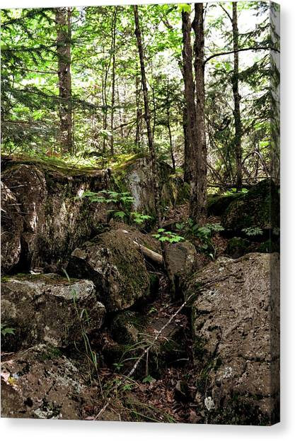 Mossy Rocks In The Forest Canvas Print