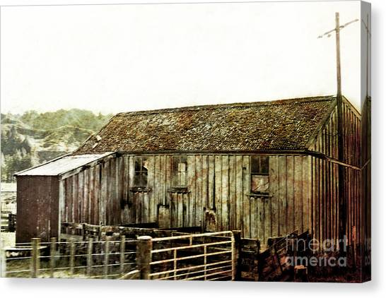 Mossy Shed Canvas Print by Linde Townsend