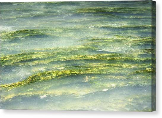 Mossy Tranquility Canvas Print