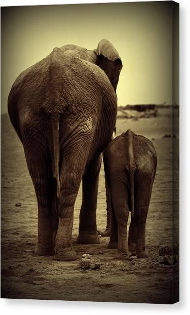 Mother And Baby Elephant In Black And White Canvas Print