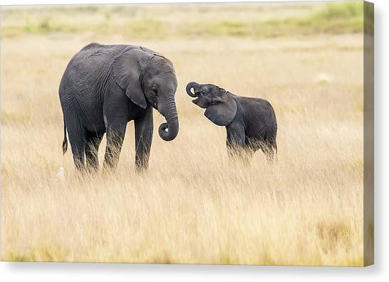 Mother And Baby Elephants Canvas Print by Hua Zhu