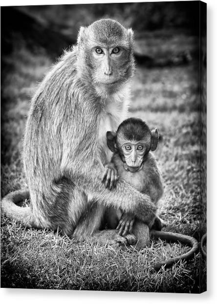 Wildlife Canvas Print - Mother And Baby Monkey Black And White by Adam Romanowicz