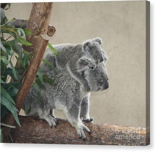 Koala Canvas Print - Mother And Child Koalas by John Telfer