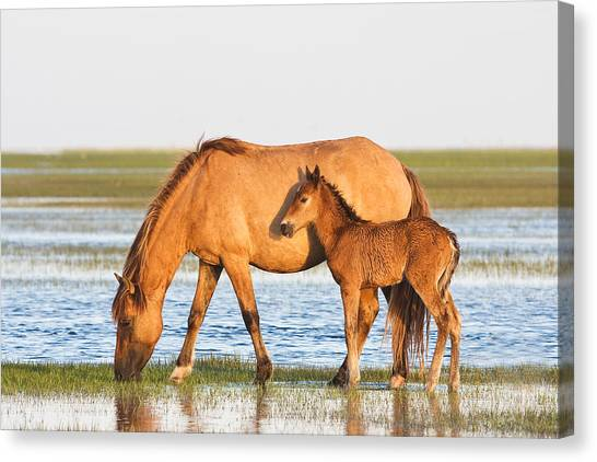 Mother And Foal Canvas Print
