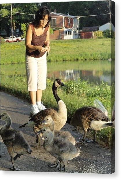 Mother Goose Canvas Print by Guy Ricketts
