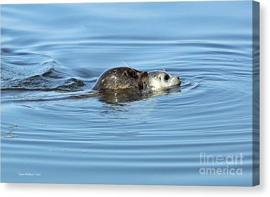 Mother Harbor Seal And Pup Canvas Print