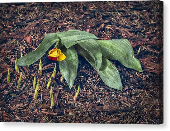 Mother Nurture Canvas Print by Nancy Strahinic
