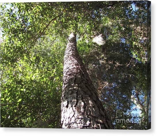 Mother Pine Canvas Print