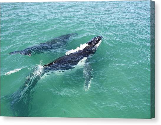 Mother Whale And Calf Canvas Print