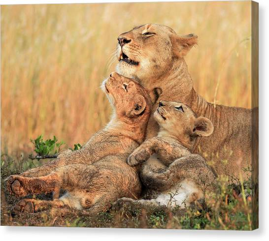 South Africa Canvas Print - Mothers Love by Jaco Marx