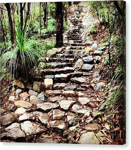Forest Paths Canvas Print - Mount Coolum #path #rocks #grasstree by Lana Houlihan