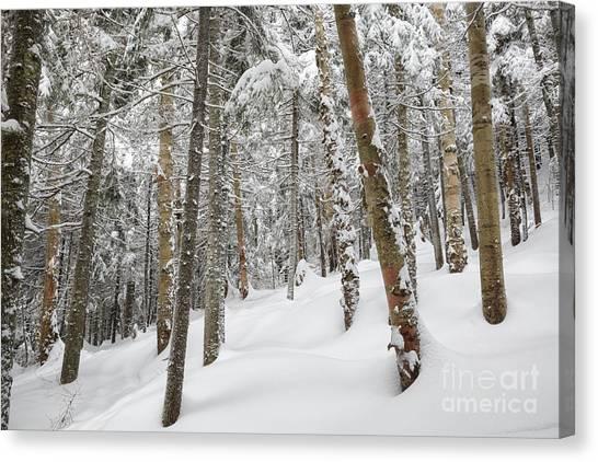 Canvas Print featuring the photograph Mount Jim - Kinsman Notch New Hampshire Usa  by Erin Paul Donovan