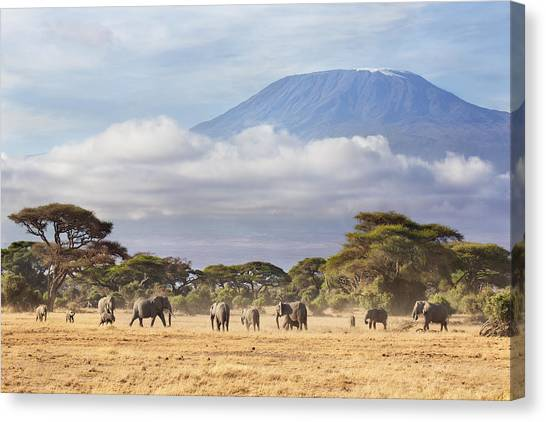 Mount Kilimanjaro Canvas Print - Mount Kilimanjaro Amboseli  by Richard Garvey-Williams