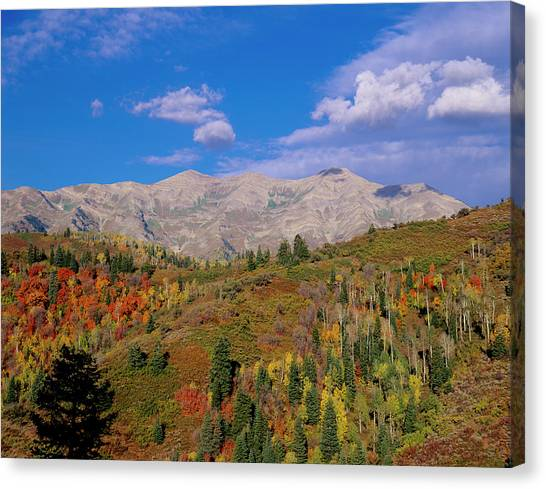Uinta Canvas Print - Mount Nebo Scenic Byway by Howie Garber