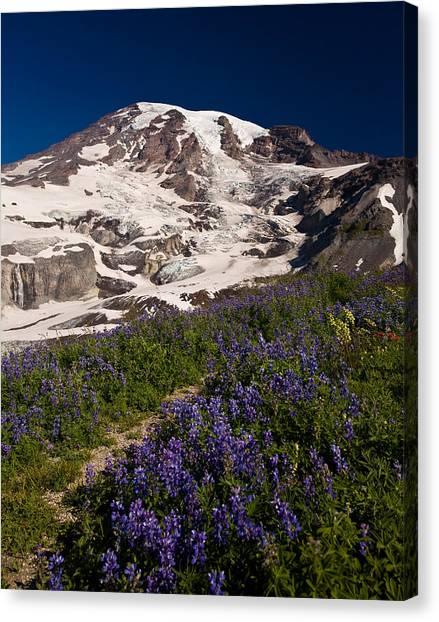 Mount Rainier Canvas Print - Mount Rainier Wildflower Meadows by Mike Reid