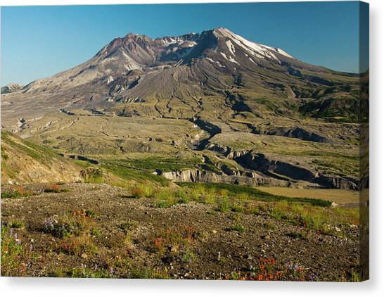 Mount St. Helens Canvas Print - Mount St Helens, Evening, Summer by Michel Hersen