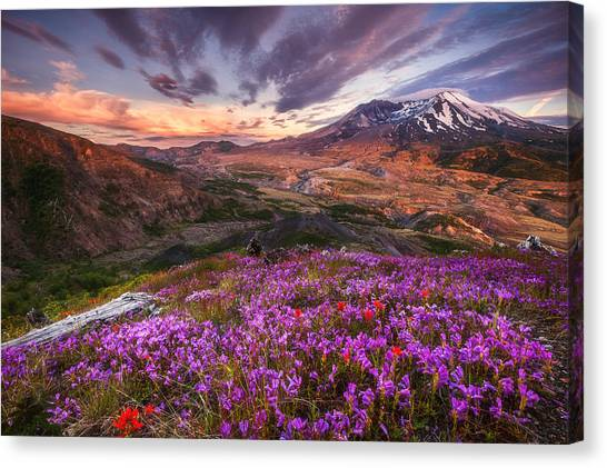 Mount St. Helens Canvas Print - Mount St Helens Lives On by Darren  White