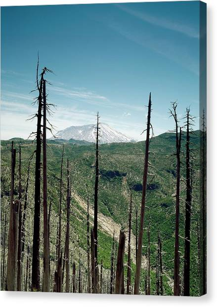 Mount St. Helens Canvas Print - Mount St Helens Volcano And Dead Trees by Library Of Congress