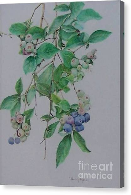 Mountain Blueberries Canvas Print