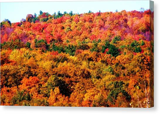 Mountain Foliage Series 015 Canvas Print
