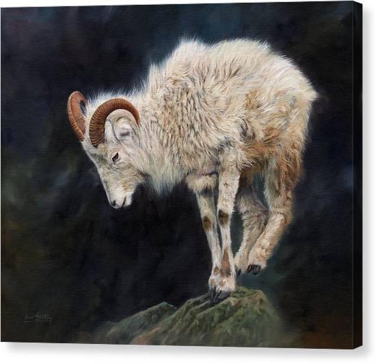 Goat Canvas Print - Mountain Goat by David Stribbling