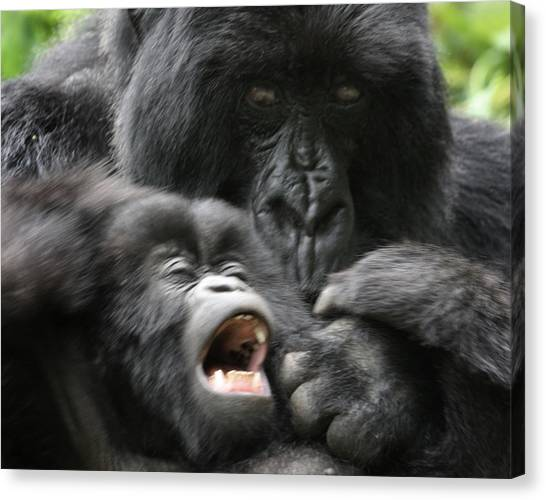Mountain Gorilla Adf2 Canvas Print