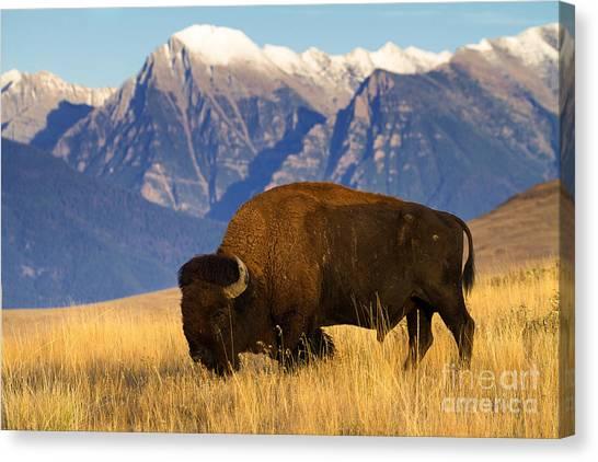 Mountain Grass Canvas Print
