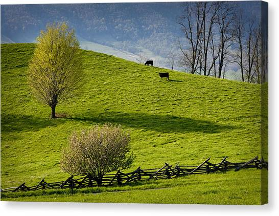 Mountain Pasture With Two Cows Canvas Print