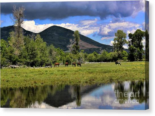 Mountain Pasture Canvas Print