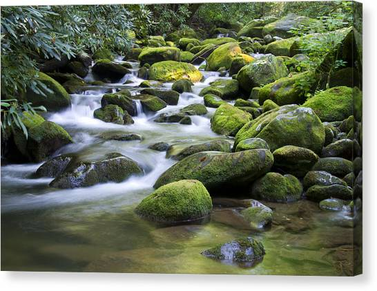 Mountain Stream 1 Canvas Print