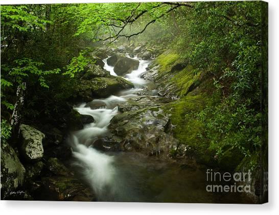 Mountain Stream 2010 Canvas Print