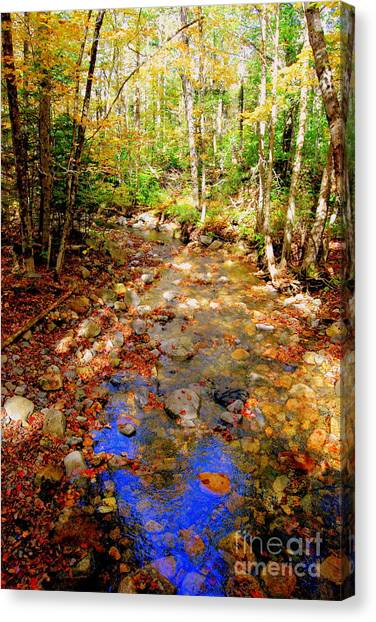 Mountain Stream Covered With Fall Leaves Canvas Print