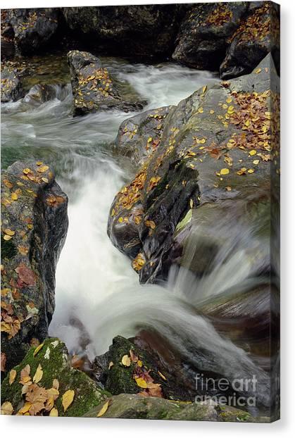 Mountains Stream 2004 Canvas Print
