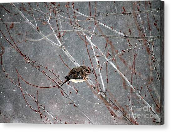 Canvas Print - Mourning Dove Asleep In Snowfall by J McCombie