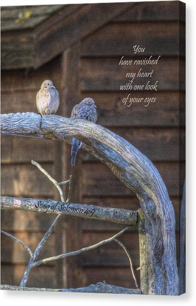 Mourning Doves Canvas Print by Cheryl Birkhead