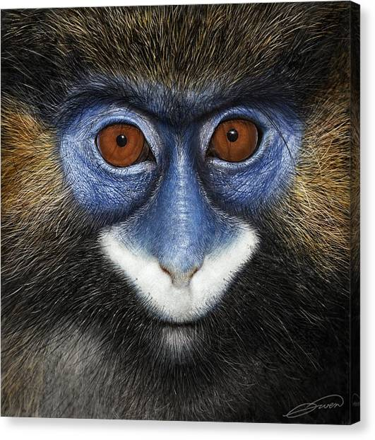 Moustached Guenon 2 Canvas Print by Owen Bell