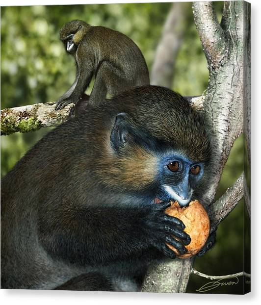 Moustached Guenon Canvas Print by Owen Bell
