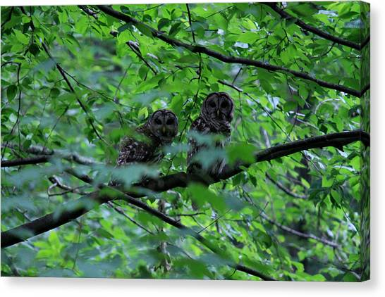 Mr And Mrs Owl Canvas Print