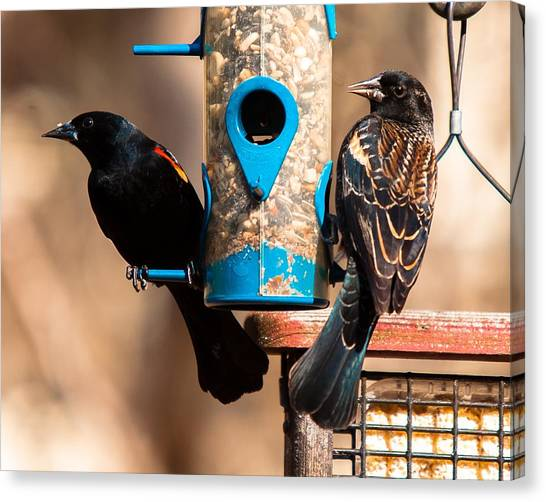 Canvas Print featuring the photograph Mr. And Mrs. Red Winged Blackbird by Robert L Jackson