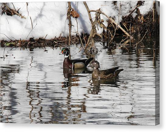 Mr. And Mrs. Wood Duck Canvas Print by Jill Bell