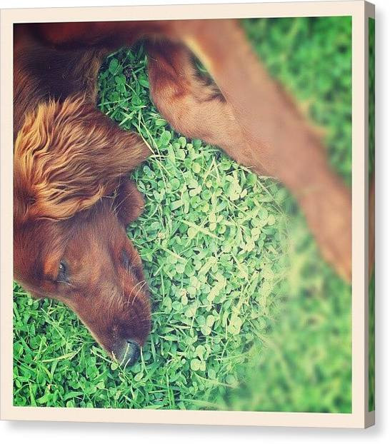 Green Canvas Print - Mr Dog by Emanuela Carratoni