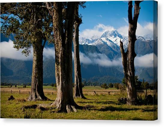 Mt Cook Through Trees Canvas Print