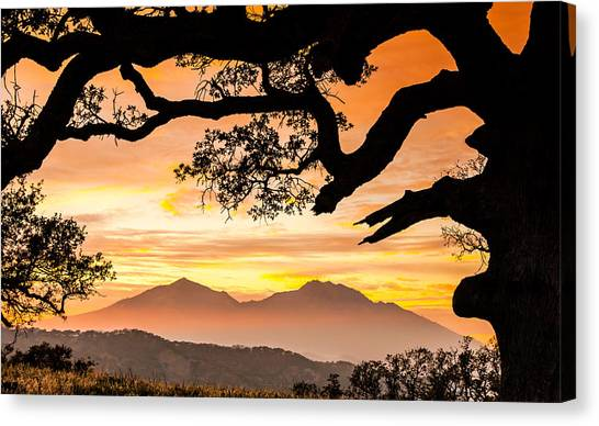 Contra Canvas Print - Mt Diablo Framed By An Oak Tree by Marc Crumpler