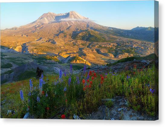 Mt. St. Helens Golden Hour Canvas Print