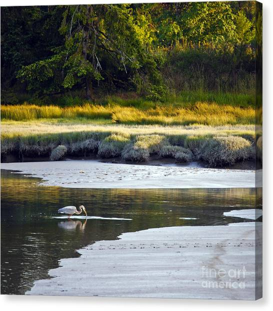 Canvas Print featuring the photograph Mud Bay Heron 1 by Susan Parish