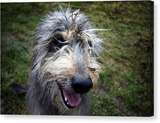 Muddy Dog Canvas Print