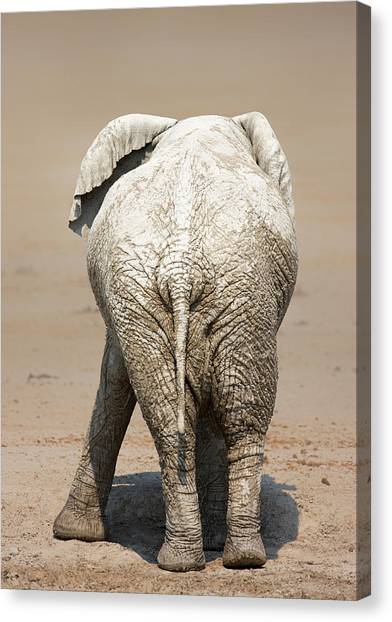 Large Mammals Canvas Print - Muddy Elephant With Funny Stance  by Johan Swanepoel