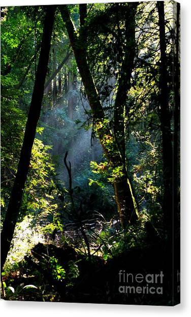Redwood Forest Canvas Print - Muir Woods by Aidan Moran