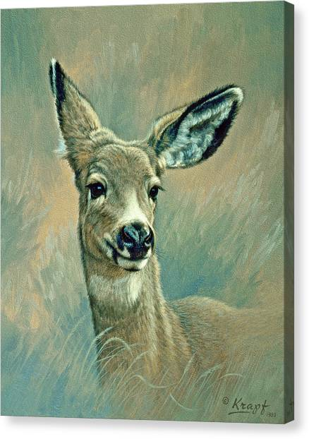 Deer Canvas Print - Muley Fawn At Six Months by Paul Krapf
